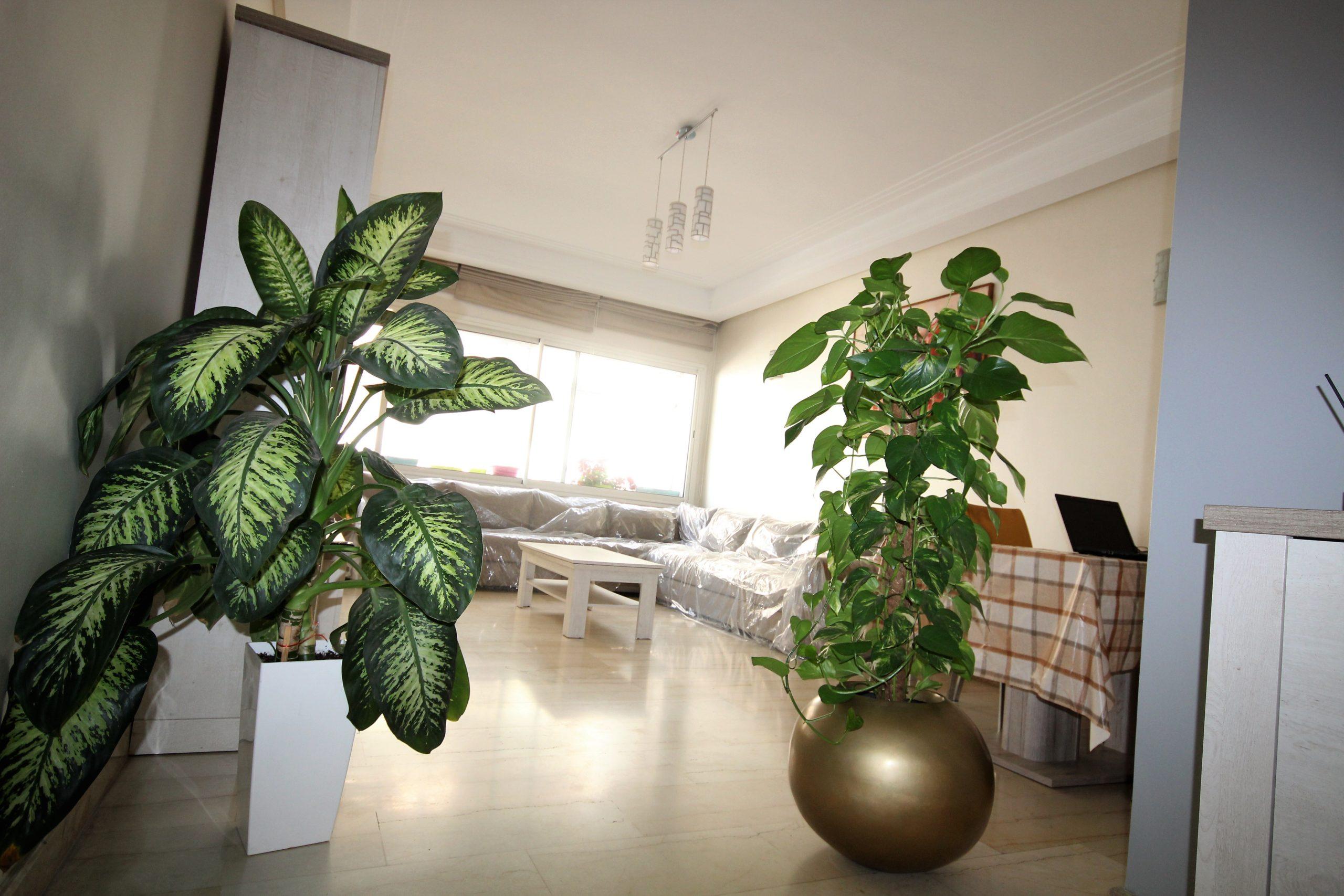 Casablanca, Princesse, loue luxueux appartement meublé 2 chambres 95 m²
